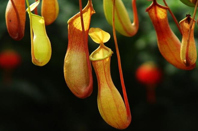 世界最奇怪的十大植物 会跳舞的草,你见过吗