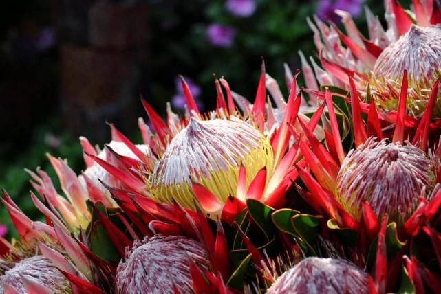 中国的国花是_世界十大最稀有的花 这些奇特的植物,你见过几种_排行榜123网
