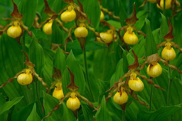 世界十大最稀有的花 这些奇特的植物,你见过几种