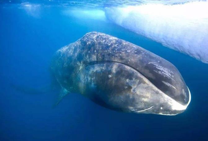 世界十大最长寿的动物 第一名违背自然规律,能够永生不死