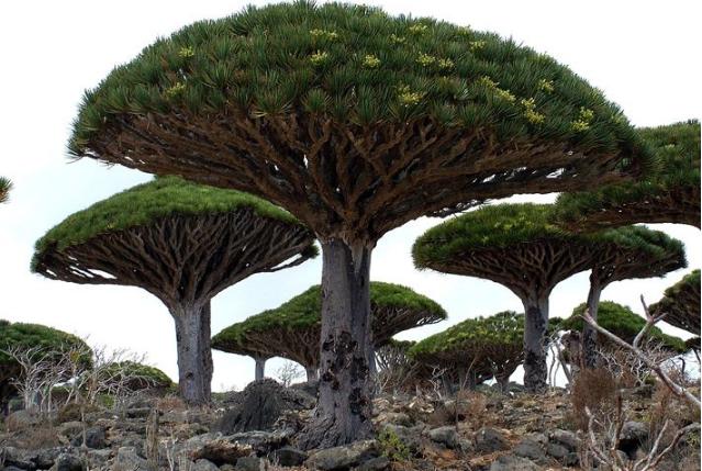 世界十大奇怪的树 不可思议的奇葩植物,你见过吗