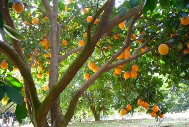 小投资十大暴富行业 果树种植上榜,有你喜欢的行业吗