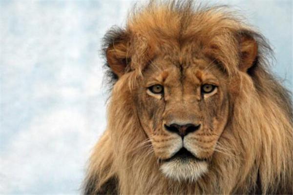 十大长跑耐力最强的动物 骡子上榜,第一绝对是无争议