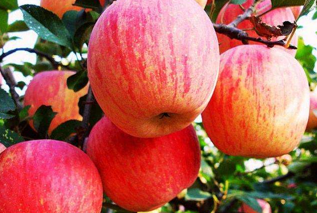 中国人最爱吃的10种水果 西瓜人气最高,你喜欢哪种呢