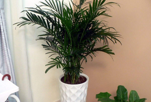 10种室内最好养的植物 观赏价值高还可以净化空气