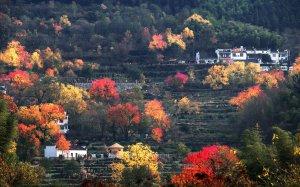 十一月國內最佳旅游地 景點推薦 云南值得一去