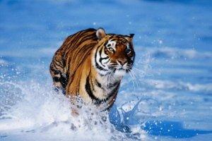 极度十大濒危动物排行榜:第一名产于中国如今几乎灭绝