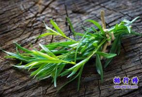 世界十大最香的植物排行榜 龙蒿叶与艾叶属同一物种