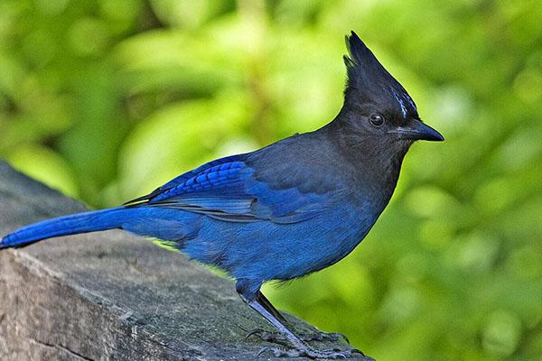 10大最漂亮的鸟排行榜