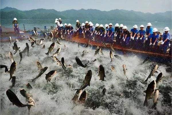 世界四大渔场排行榜 亚洲地区仅北海渔场上榜,欧洲占据两个