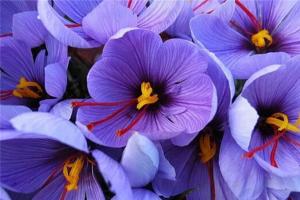 世界上最珍贵的花排行榜 世界上有哪些珍贵的花朵