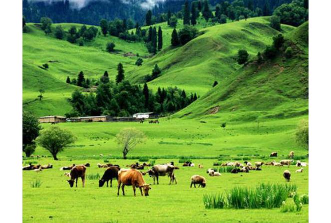 全球四大草原排行榜 中國占了三個,呼倫貝爾位列第一