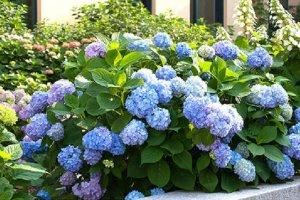 十种不适合室内养的花:黄杜鹃上榜,第三你绝对想不到
