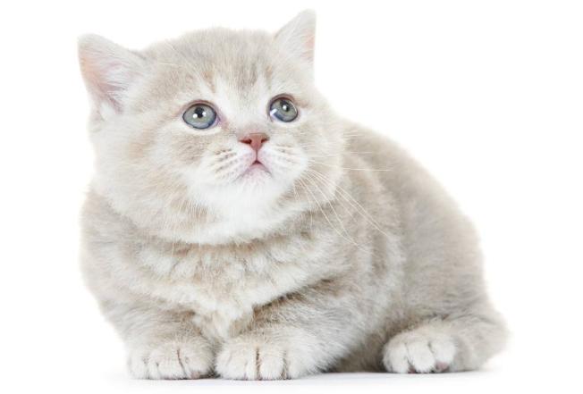 全球最红萌宠排行榜 你最爱什么宠物呢,快来看看吧