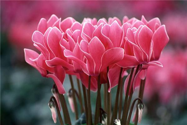 最好看的花朵排名