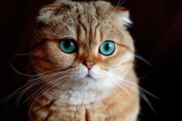最适合家养的猫top10 中华田园猫最常见布偶猫高贵
