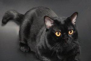免费韩国成人影片韩国三级片大全在线观看最不掉毛的猫 斯芬克斯猫是猫毛过敏者的首选