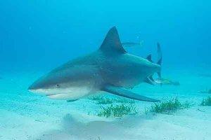 世界上最凶猛的海洋生物:湾鳄上榜  鲨鱼类最凶猛