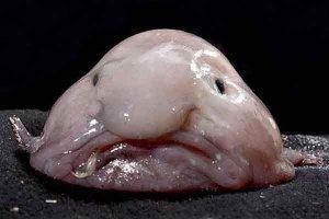 世界上最稀奇的十種生物:夢海鼠上榜 海洋里奇特的生物最多