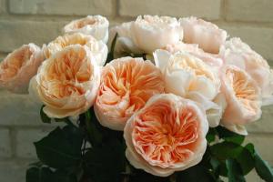 亚洲久久无码中文字幕最貴的玫瑰花品種:朱麗葉上榜,第2拿破侖之妻最愛