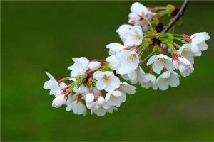 女主角多的小说排行榜 逢春背景是古代九届农场是种田文