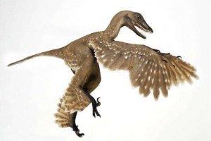 世界十大最著名恐龙 始祖鸟会飞秀颌龙体型小