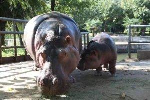 中国十大最受欢迎动物园 广州长隆野生动物世界上榜