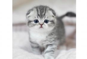 免费看成年人视频大全最温顺的貓排名 温柔又可爱的貓咪,你最爱哪一种呢
