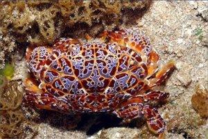 十大毒蟹排行榜:第一蟹中眼镜蛇,第四形似面包蟹
