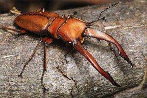 世界上最值钱的昆虫排行:蟋蟀竟上榜,第2世上最美蝴蝶