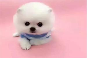 十大绝不咬人的狗:蝴蝶泉上榜,金毛第一