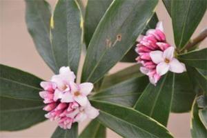 家里最旺财的十种花:蝴蝶兰上榜,第五为人带来好运