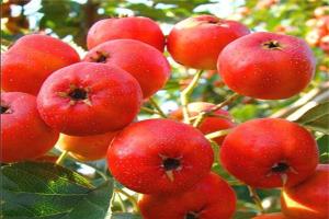 头三月怀孕禁吃的水果排行:榴莲上榜,它容易长斑