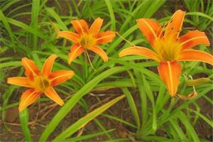 最吉祥的花排行榜:兰花上榜,它象征着富贵