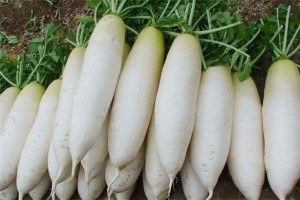 十大清肠排便蔬菜:西芹上榜,第一价格十分便宜