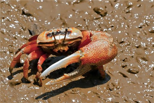 十大毒蟹排行榜
