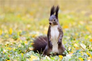 卫生又好养的小型宠物前十名 花栗鼠很是粘人第一容易饲养