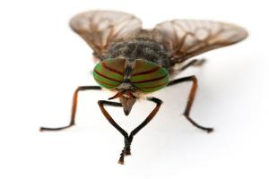 十大吸血昆虫:蜱虫臭虫均上榜 第二常见又讨厌