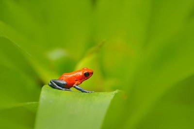世界十大致命动物,小蚊子竟然位列第一!