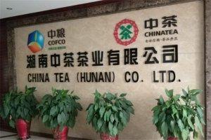 湖南十大茶企排行榜:金洲茶叶上榜,第二有着专业背景