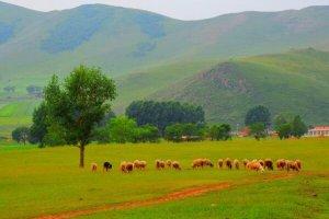 北京周邊十大草原 每一個都美翻天你去過幾個