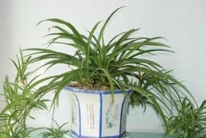 """最适合养在室内的植物排行 君子兰上榜,第三被称为""""生命之花"""""""
