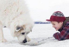 世界十大巨型犬种,纽芬兰犬上榜,第二个是犬中之王
