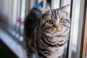 世界上最适合新手养的十种猫,狸花猫上榜,第四是仙女猫