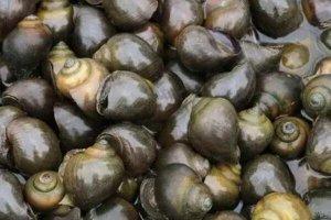 中國十大外來入侵物種,水葫蘆僅排第四,第一最為大家所熟知