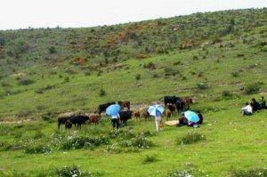 中國十大最美牧場,天山牧場上榜,第一是南方僅有的高山牧場