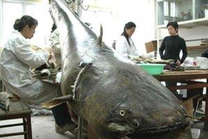 """世界十大攻击力最强的淡水鱼,白鲟上榜,第三被称为""""水中清道夫"""""""