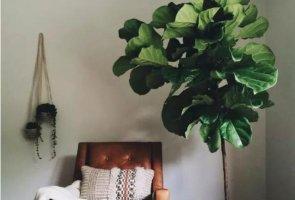 盘点十大红遍社交网络的网红植物,竹芋上榜,第四是考拉的食物